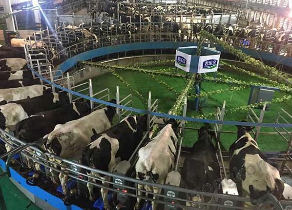 同样引进了转盘式挤奶机的大型牧业公司还包括君乐宝等品牌.